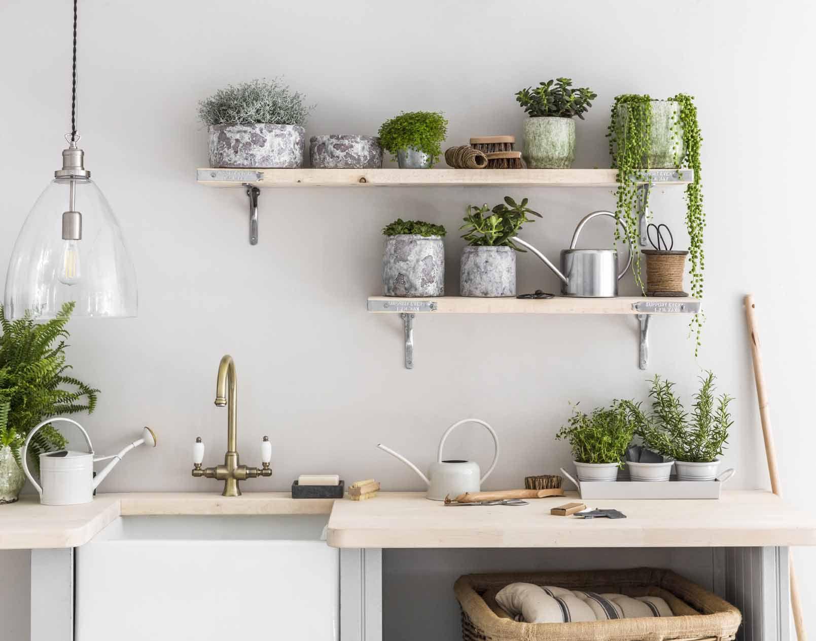 Mách bạn cách chọn cây xanh phù hợp trong phòng bếp gia đình
