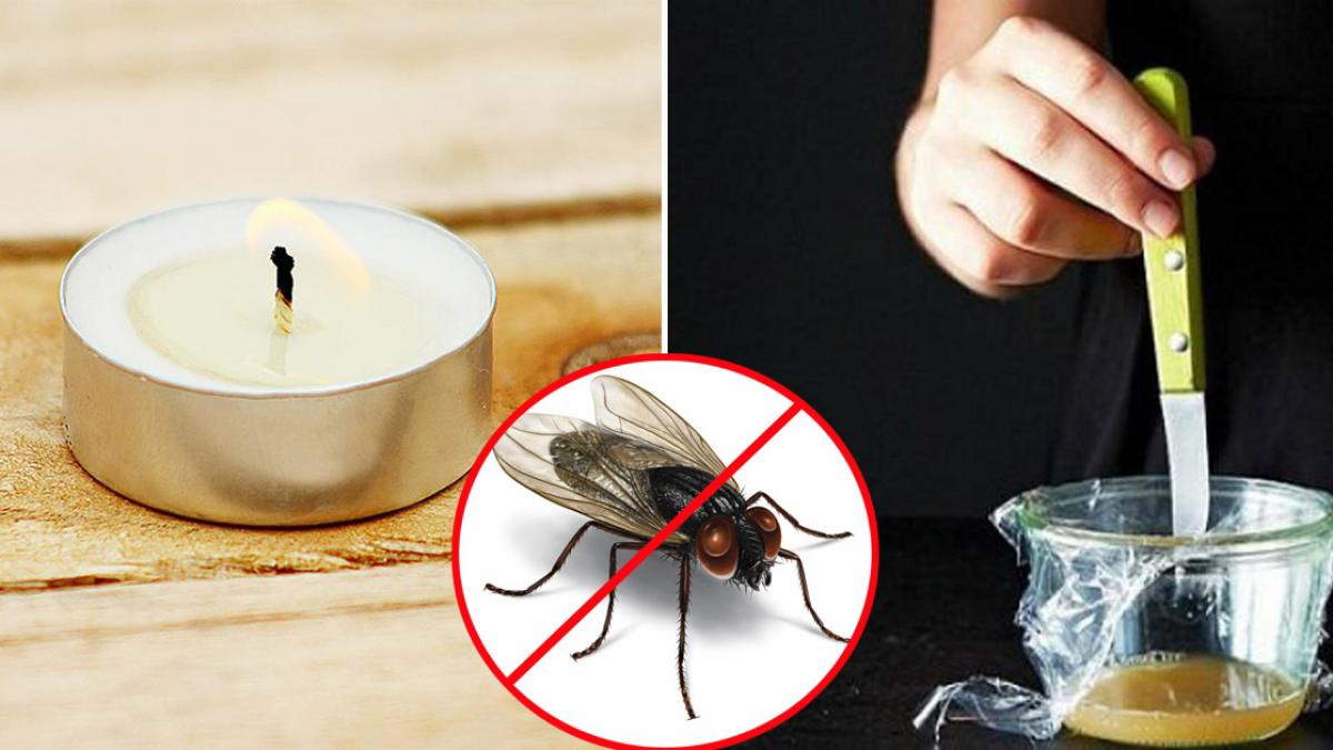 Mẹo đuổi ruồi ra khỏi phòng bếp nhà bạn